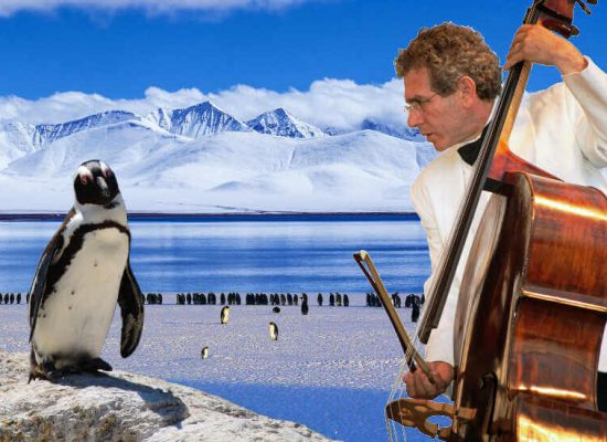 Pinguin und Musiker
